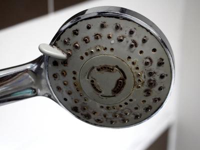 A moldy shower head.